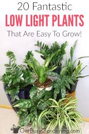 20 low light indoor plants that are easy to grow houseplants