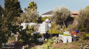 urban beekeeping with the flow hive youtube