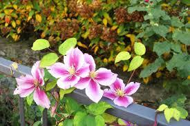 free images nature blossom leaf flower petal botany flora