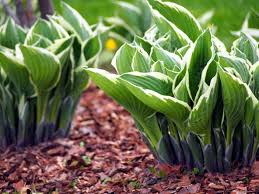 Shade Garden Vegetables by 10 Plants To Make Your Shade Garden Shine