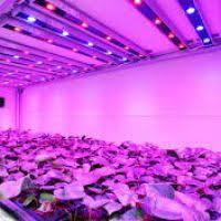 Led Grow Lights Cannabis Led Grow Light Justsingit Com