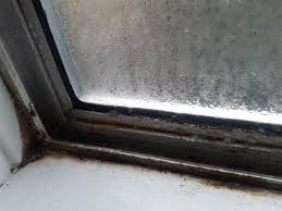 window condensation and mold how to nuke it from orbit mildew