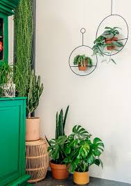 home decor with plants boho plant in the home jungalowjungalow