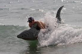 Great White Shark Attack Cape Cod - shark sighting in westport mass bonus for shark week