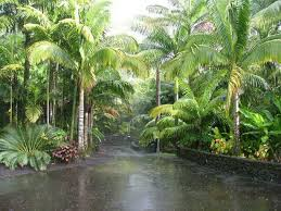 Tropical Backyard Designs Stunning Tropical Backyard Design Ideas Pictures Trend Ideas