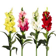 snapdragon flowers 58cm artificial snapdragon flower stem choose colour from list