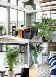 9 low maintenance indoor plants that purify the air around you