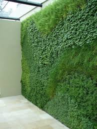 a green wall planted with easy to grow herbs sticks and stones