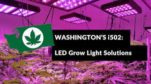 commercial led grow lights why i502 commercial growers choose cirrus led grow lights youtube
