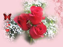 wallpaper flower red rose images of love roses hd red roses amp love heart wallpapers hd