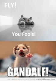 Fly Meme - fly you fools cat meme cat planet cat planet