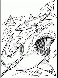 drawing ocean animals pencil art drawing
