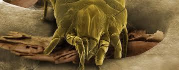 acari materasso rimedi acari della polvere