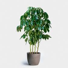plant delivery plant delivery nyc greenery nyc