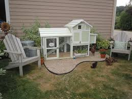 Backyard Chickens Com - 202 best chickens images on pinterest backyard chickens