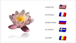 23 flower names english french russian swedish romanian youtube