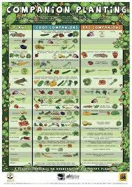339 best companion planting and pollinators images on