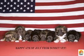 American Flag Sunset Patriotic Paws Pets Celebrating The 4th Of July Sunset