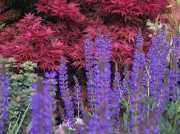 Forget The Flowers U2013 Shrubs And A Mention Of Perennials Ramblin