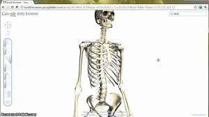Anatomy Of Human Body Bones The Bone Song In Google Body Browser Youtube