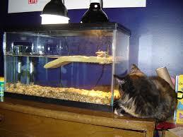 fish tank fantastic gallonle tank photos design hhmvt diy custom