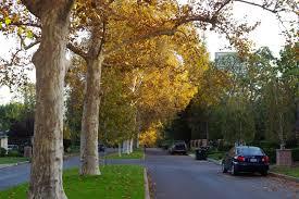 Seeking Los Angeles Desperately Seeking A Season Where To Spot Autumn In L A Los