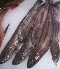 cuisiner le merluchon merlu merluchon colin