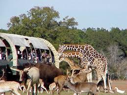 Louisiana wildlife tours images St tammany parish louisiana northshore travelingmom jpg