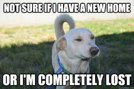 New Home Meme - not sure if i have a new home or i m completely lost wiley
