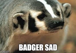 Badger Memes - sad badger memes imgflip