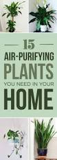 Indoor House Plants Low Light Best 25 Palm House Plants Ideas On Pinterest Indoor Plants Low