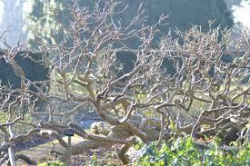winter garden at the savill garden windsor kidsinthegarden