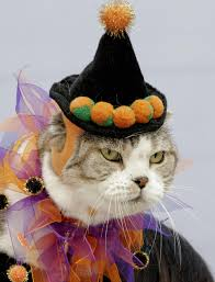 Pet Cat Halloween Costumes One Out Of Two Pets Wear Halloween Costumes Cbs Detroit