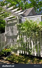white trellis fence flowering bridal wreath stock photo 16689064