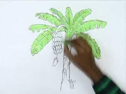 how to draw a banana tree youtube