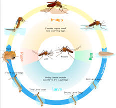 Where Do Mosquitoes Hide In Your Room by Kim Wright Pest Doc Pest Control Dayton Ohio