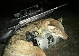 Coyote Hunting Lights Night Hunting Scan Light Michigan Sportsman Online Michigan
