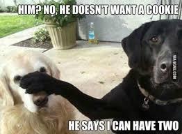 Dog Owner Meme - funny dog memes cuteness overflow