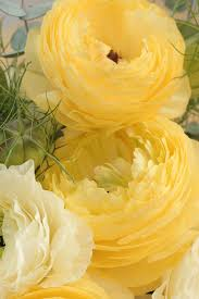 397 best plants u0026 gardens u2013 orange yellow u0026 white images on
