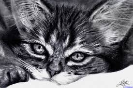 of kittens how to draw a realistic kitten cute step by cat litle