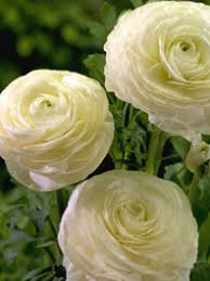 wholesale flowers online wholesale flowers bulk flowers wholesale flowers online