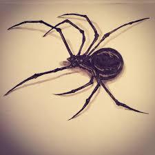 black widow spider tattoo sketch drawing by ranz pinterest