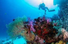 scuba in playa del carmen diversity diving scuba diving in