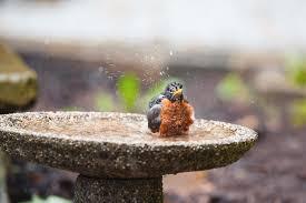 bird feeding wild birds unlimited omaha ne