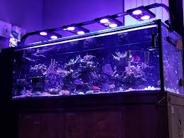 Reef Aquarium Lighting The Importance Of Water Movement In The Reef Aquarium Reefs Com