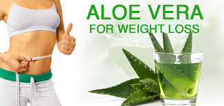 aloe vera plant facts aloe vera for weight loss some untold facts