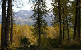 Alaska forest images Fall colors on alaska 39 s national forests offer beautiful vistas jpg