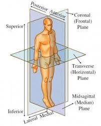 Knee Anatomy Pics Anatomy Knee Stability
