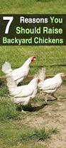 7 reasons you should raise backyard chickens homestead survival site