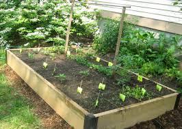 building a vegetable garden gardening ideas